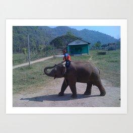elephant nature park Art Print