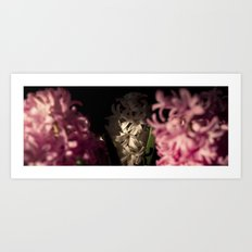 Hyacinth 12 Art Print
