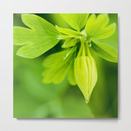 Golden Spur Columbine Metal Print