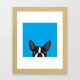 Boston Terrier Blue Framed Art Print