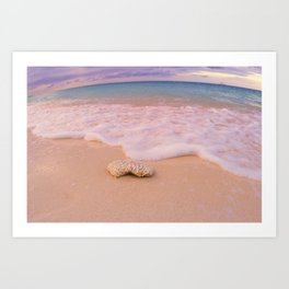 Shell Beach Art Print