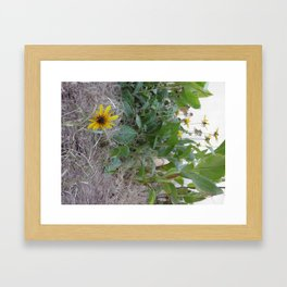 Sunshine Yellow - 2  Framed Art Print
