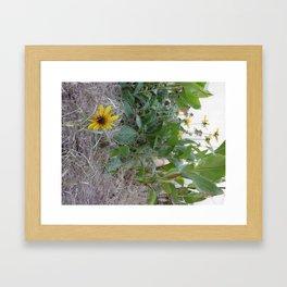 Sunshine Yellow - 2  Framed Art Print