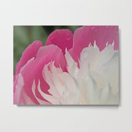 Bowl of Beauty (Peonia Lactiflora) Metal Print
