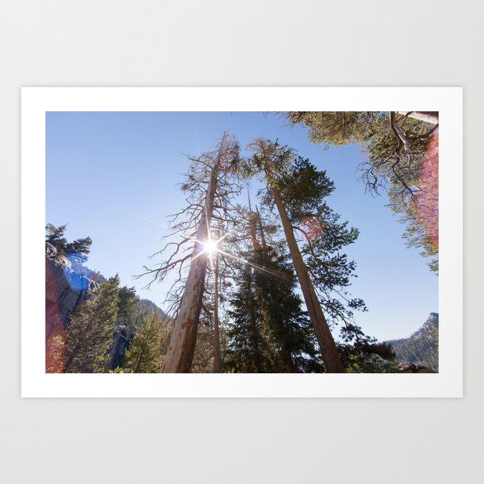 Mountainside Jeffrey Pine Trees (Lower Echo Lake, California) Art Print