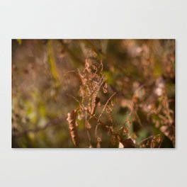 HOME: EARLY OCTOBER, WEEDS Canvas Print