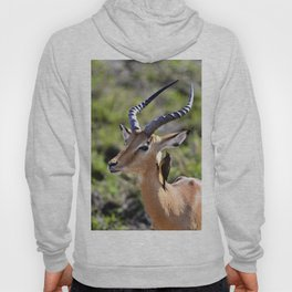 Wildlife Gossip Hoody