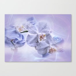Weiße Orchideen Canvas Print