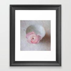 Pale Pink Textured Ranunculus Framed Art Print