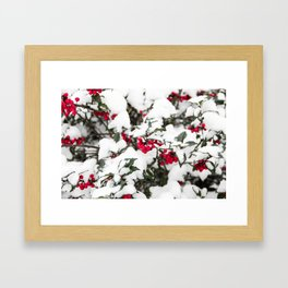 SNOW COVERED HOLLY Framed Art Print