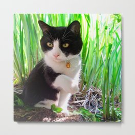 Orazio and the princess frog Metal Print
