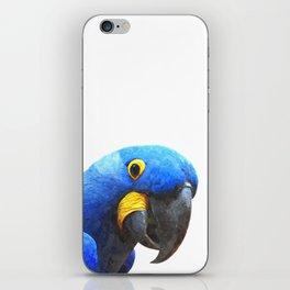 Blue Parrot Portrait iPhone Skin