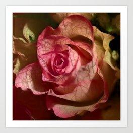 Extra veins on a rose Art Print