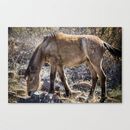 Grazing for Survival Canvas Print