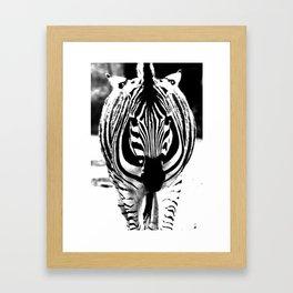 Bold Zebra Framed Art Print