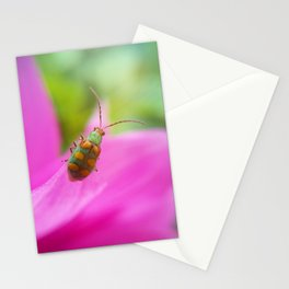 Little Life Stationery Cards