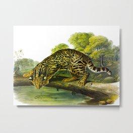 Leopard Cat Vintage Illustration y John James Audubon Metal Print