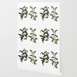 Caffeine Botanicals Wallpaper