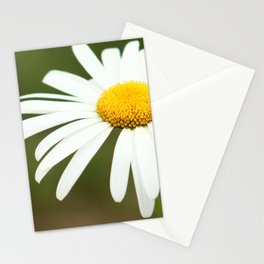 Delicate blossoming garden daisy, classic photo, single white flower, close up nature photography Stationery Cards