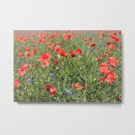 poppy flower no6 Metal Print