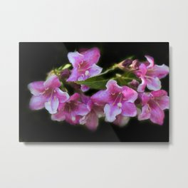blossoms on black background -02- Metal Print