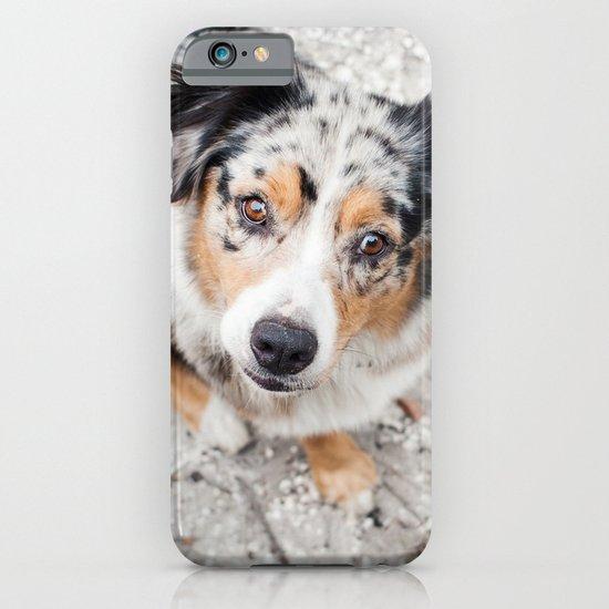 Australian Shepherd iPhone & iPod Case