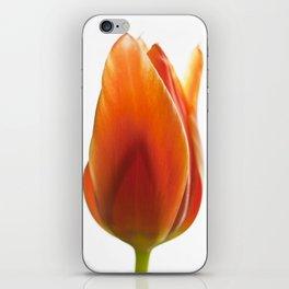 tulip pictures iPhone Skin