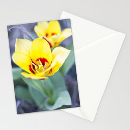 Early Bloom Stationery Cards
