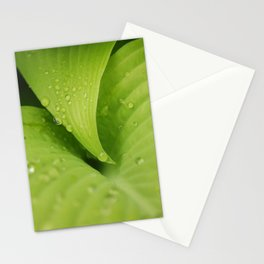 Dew Drops Stationery Cards