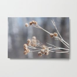 Dry Flower Metal Print