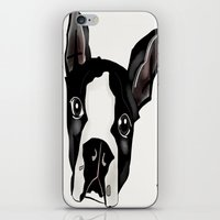 boston terrier iPhone & iPod Skins featuring Boston Terrier by transFIGure