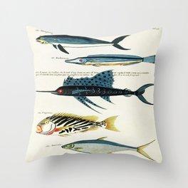 Antique Fish Louis Renard Vintage Scientific Illustration Species Labeled Diagram Encyclopedia Lithograph Throw Pillow