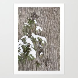 Winter Cedar Art Print