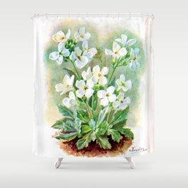J Eudes - Arabis albida - vintage botanical print Shower Curtain
