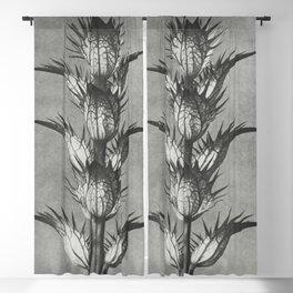 Acanthus mollis (bears breeches) enlarged 4 times from Urformen der Kunst (1928) by Karl Blossfeldt Blackout Curtain