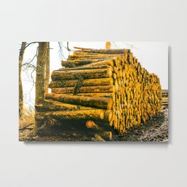 Poltery Site (Wood Storage Area) After Storm Victoria Möhne Forest 4 bright Metal Print