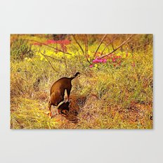 Foraging Canvas Print