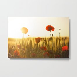 Sunset Poppys Field Landscape Metal Print
