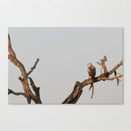 Hawk Eagle with its Catch Canvas Print
