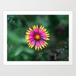 Beautiful Nature Art Print