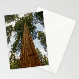 Sequoia Tree, McKinley Grove, California Stationery Cards