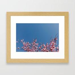 #cherryblossomobsession Framed Art Print