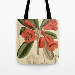 Rhododendron dichroanthum, Ericaceae Tote Bag