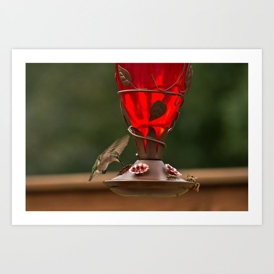 Hummingbird Legend Art Print
