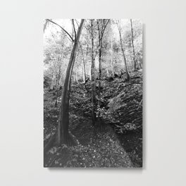 Forest black and white 11 Metal Print