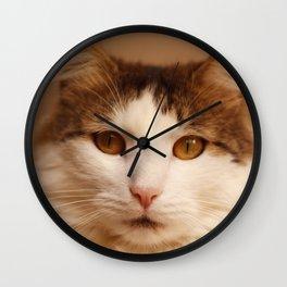 Ragamuffin Cat Portrait Wall Clock