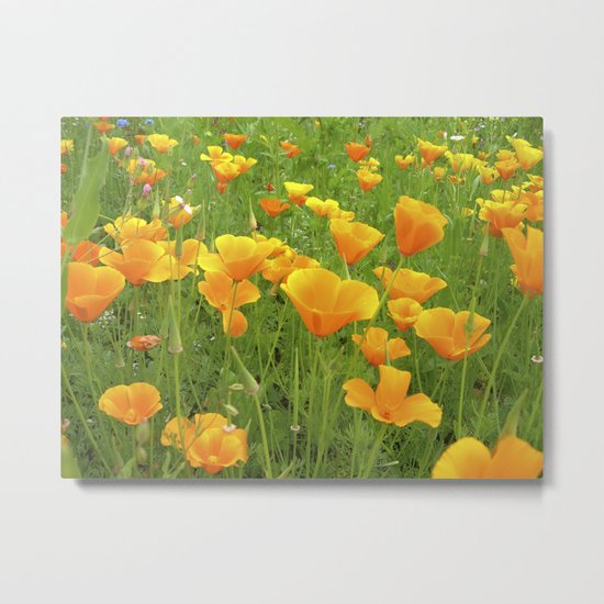 california poppy VI Metal Print