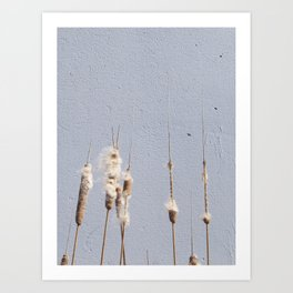 cat tails and concrete. odd. Art Print