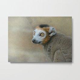 Golden Crowned Lemur Metal Print