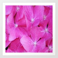 Pink Hydrangea flowers Art Print
